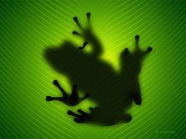 Frog_1024x768_2
