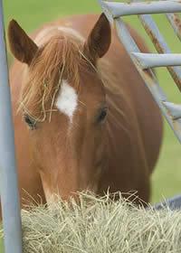Horsehay200