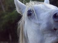 Scary_horse_1
